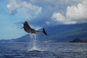 18 PI_Whale Watching by Pedro Madruga